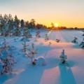 Заснеженный лес в закат - Snowy forest in the sunset