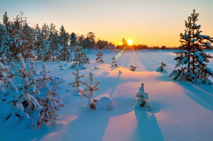 Fotolia 35937129 Subscription Monthly M 700x464 Заснеженный лес в закат   Snowy forest in the sunset