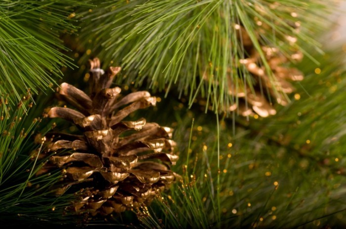 Fotolia 49448993 Subscription Monthly M 700x464 Шишка на елке   Bump on the Christmas tree