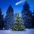 Рождественские елки - Christmas Trees