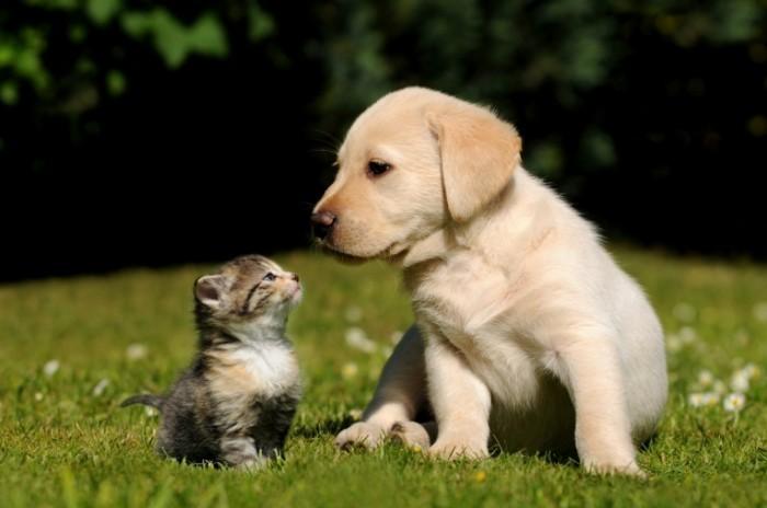fotolia 38411802 m 700x464 Собака и кошка   Dog and cat