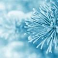 Заснеженная ветвь - Snow-covered branch