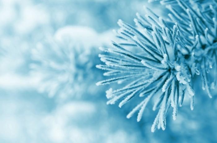 shutterstock 116895082 700x463 Заснеженная ветвь   Snow covered branch