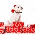 Собака на подарках - Dog on gifts