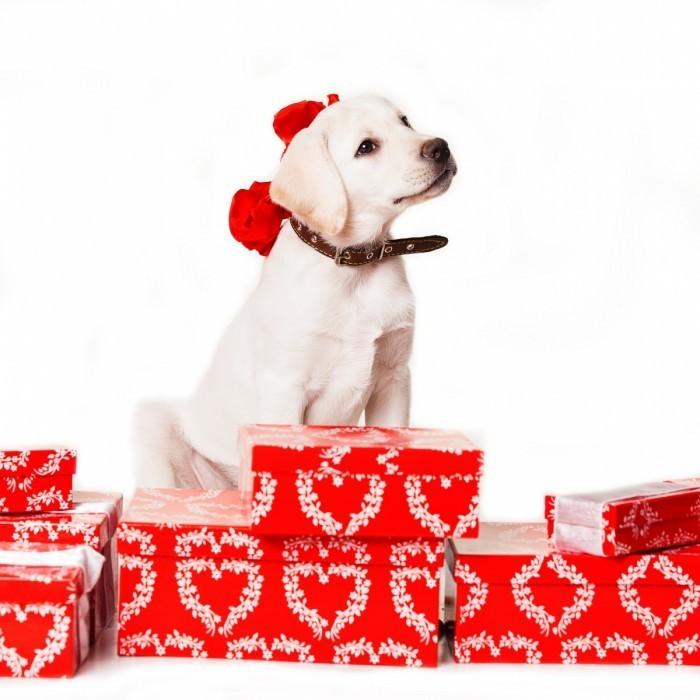 shutterstock 165135905 700x700 Собака на подарках   Dog on gifts