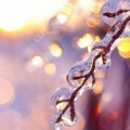 Обледенелая ветвь - Icy branch