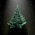 Елка - Fir-tree