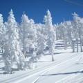 Снежные деревья - Snowy trees