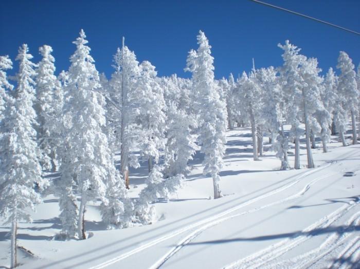 Снежные деревья   Snowy trees
