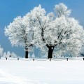 Заснеженные деревья - Snow-covered trees