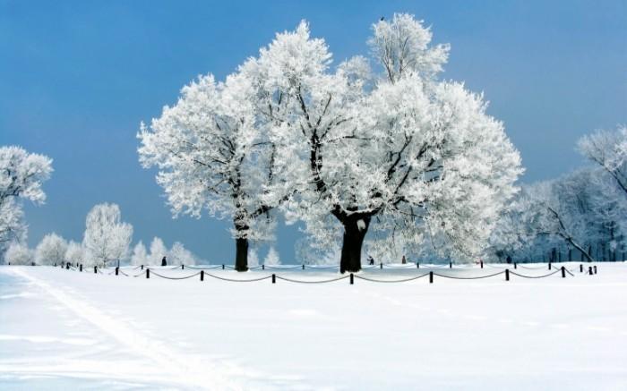 winter pictar.ru  94  700x437 Заснеженные деревья   Snow covered trees