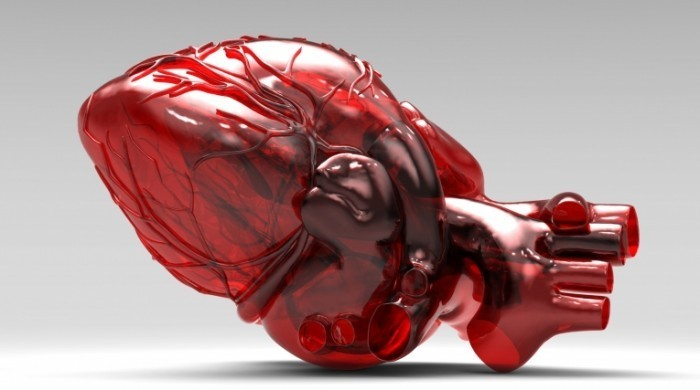 1414829516 shutterstock 700x390 Орган сердце   Body heart