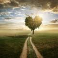 Дерево в виде сердца - Tree in the form of heart