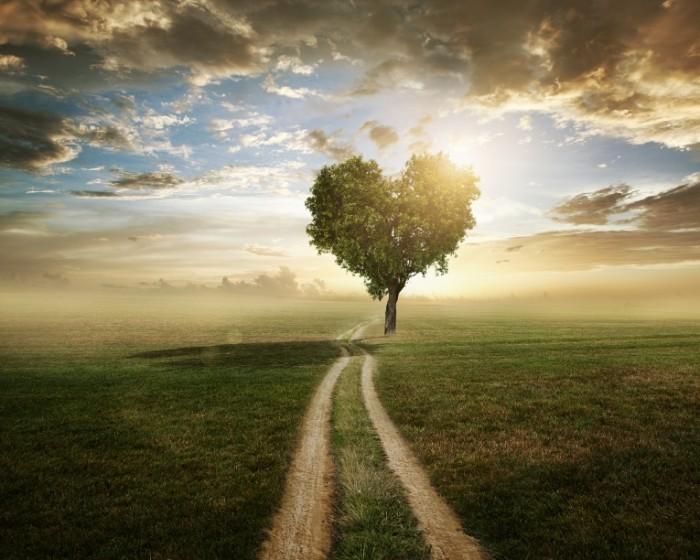 Dollarphotoclub 53524618 700x560 Дерево в виде сердца   Tree in the form of heart