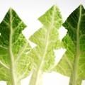 Елки из салата - Firs of lettuce