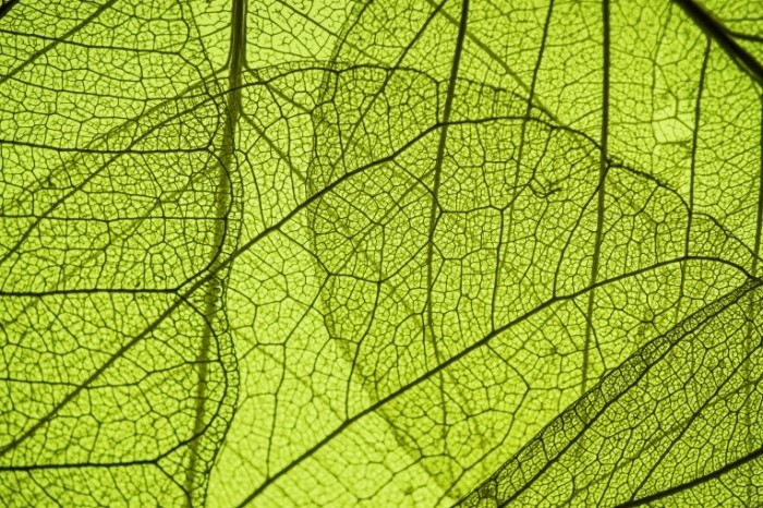 Dollarphotoclub 58645090 700x466 Текстура листья   Texture of the leaves