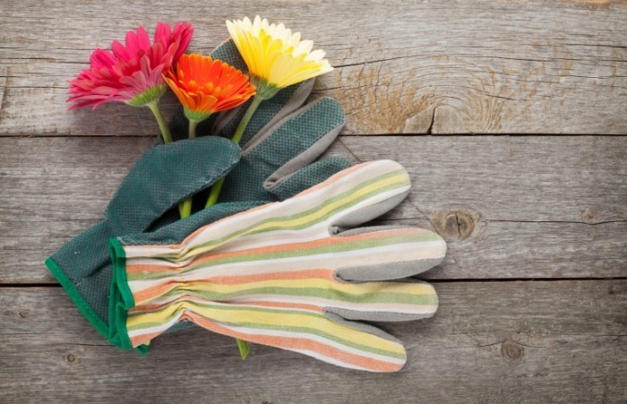 Dollarphotoclub 71776255 700x451 Перчатка и цветы   Glove and flowers