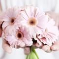 Розовые орхидеи - Pink orchid