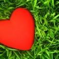 Сердце на траве - Heart on the grass