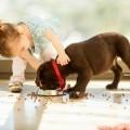 Девочка с собакой - Girl with a dog