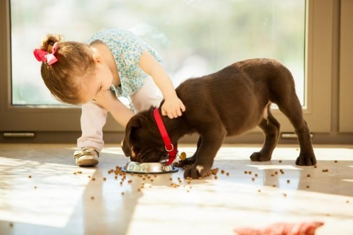 Dollarphotoclub 60950334 700x466 Девочка с собакой   Girl with a dog