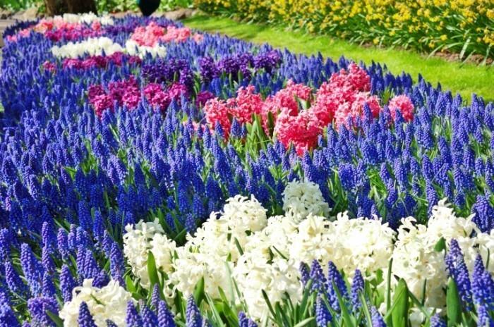 Dollarphotoclub 64171415 700x464 Цветы в поле   Flowers in the field