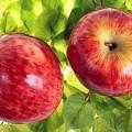 Красные яблоки - Red apples