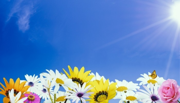 dollarphotoclub 69733091 700x402 Полевые цветы   Wildflowers