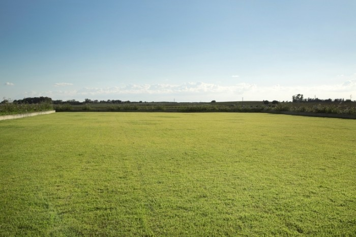 rsz dollarphotoclub 70900117 700x466 Зеленое поле   Green field