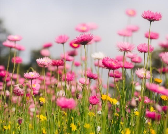 Angela Lumsden 1400 700x560 Цветы в поле   Flowers in a field