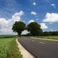 Дорога с деревьями - Road with trees