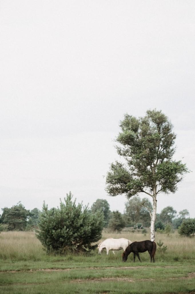 robertpauljansen kampina 8 682x1024 Лошади на природе   Horses in nature