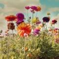 Полевые цветы - Wildflowers