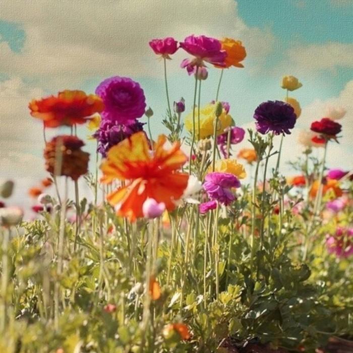 Полевые цветы   Wildflowers