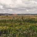 Поле - Field