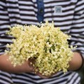 Цветы в руках - Flowers in hands