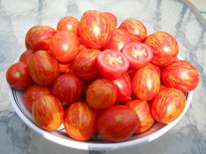 KGrHqJlgFZJoVUR0BQR7IQo9w 60 57 700x524 Помидоры   Tomatoes