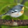 Птичка - Birdie