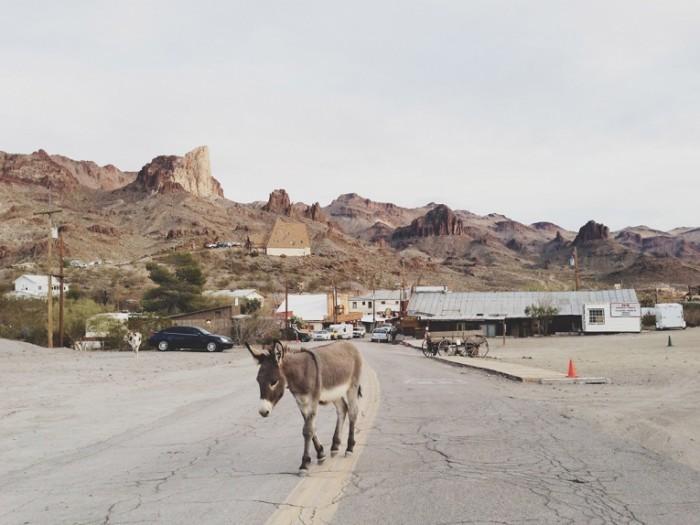 boro russ 700x525 Осел на дороге   Donkey on the road