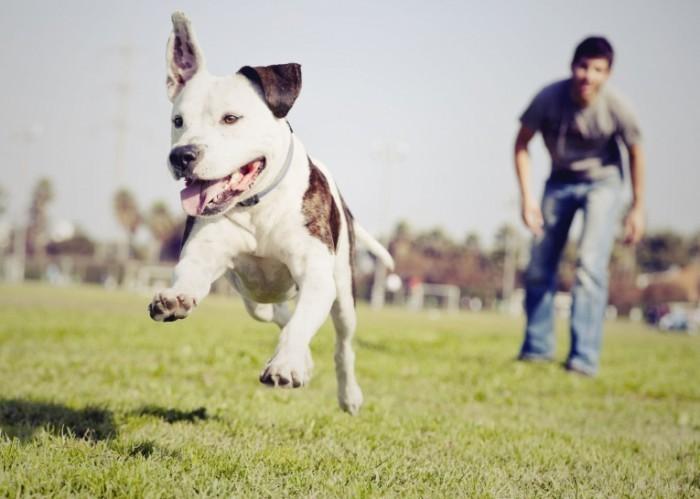 iStock 000023024780Large copy 700x499 Мужчина с собакой на поле   Man with the dog on the field