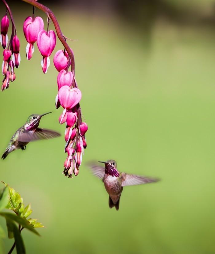 shutterstock 119152141 700x825 Птички вокруг ветки   Birds around the branch