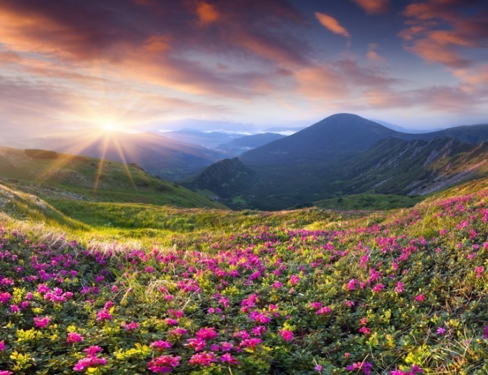 shutterstock 175995260 700x538 Долина с цветами   Valley flowers