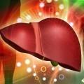 Печень - Liver