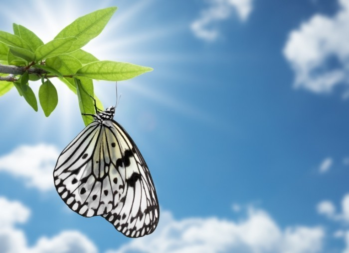 Fotolia 19665745 700x509 Бабочка на листке   Butterfly on a leaf