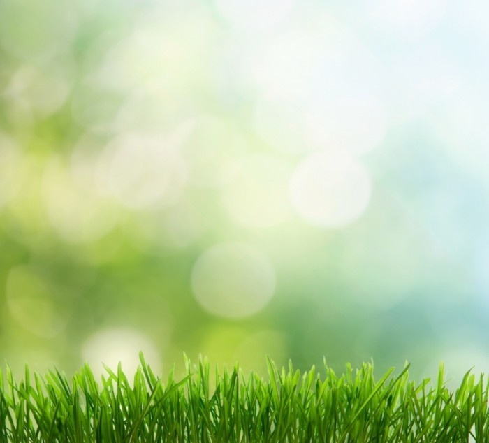 Fotolia 35984804 Subscription XL 700x634 Фон с травой   Background with grass