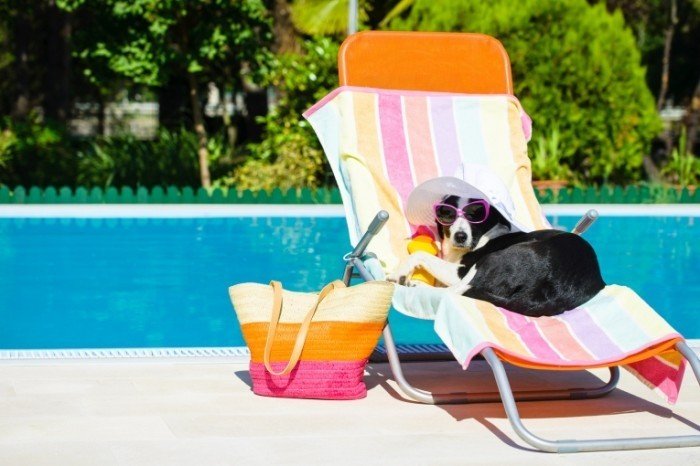 Fotolia 65507549 Subscription Monthly M1 700x466 Собака на лежаке   Dog on a lounger