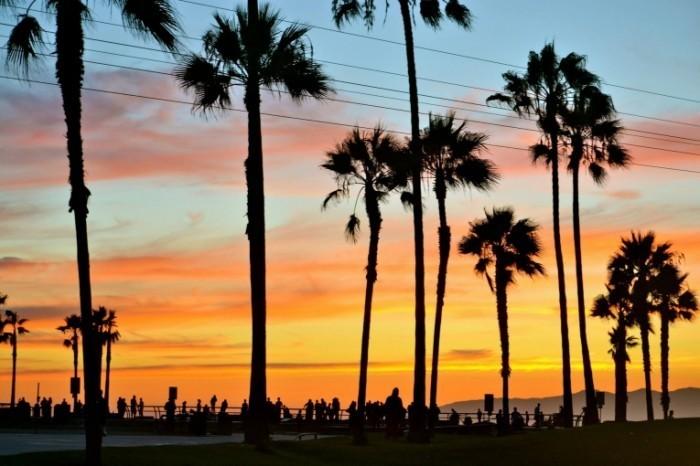 Venice Admiral Suites Venice Beach Santa Monica Los Angeles sunset at the beach 700x466 Пальмы   Palma