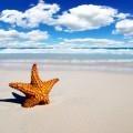 Морская звездочка - Sea star