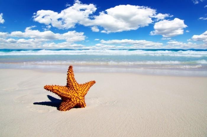 beach desktop background hd 700x463 Морская звездочка   Sea star