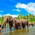 Слоны - Elephants